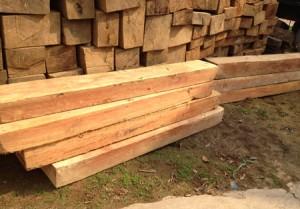 Peru: Ứng dụng công nghệ chống khai thác gỗ lậu